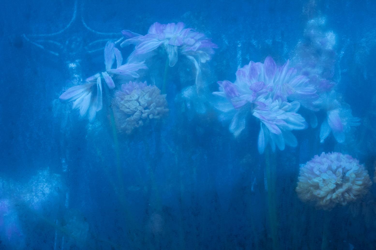 flores perpetuas